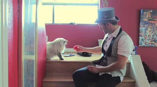猫に手品を見せたら?