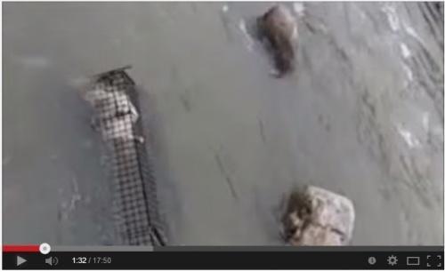 猫を溺れさせた映像