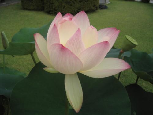 【まとめ】日本仏教各宗派は原発についてどう考えている?