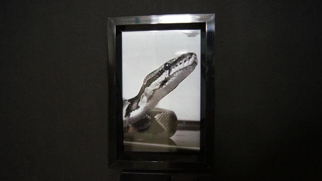 6年飼った大好きな蛇の葬式(MEGWIN TV)