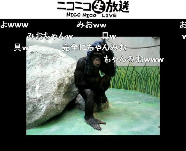 声優の相沢舞さんが、長野原みおの声でチンパンジーの連続写真にアテレコした
