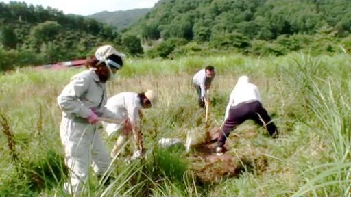 地表を削っての除染実験