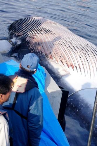 10日に見つかったクジラの死骸