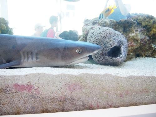 サメとウツボ