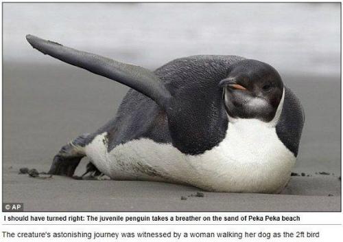 世界一孤独なペンギン