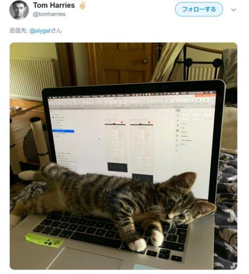 ネコはキーボードが大好きなのです