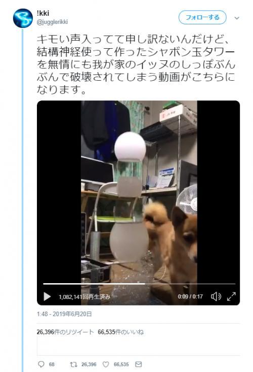 """犬の""""しっぽぶんぶん""""でシャボン玉タワーが破壊される動画に「まさに水の泡」「イッヌー!!」の声"""