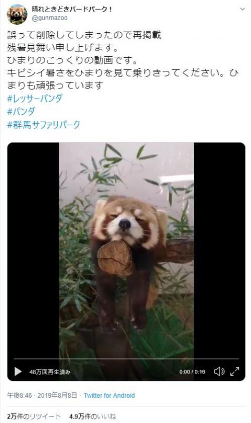 """レッサーパンダが""""こっくり""""うたた寝した結果→「絶妙なバランス感覚」「たれぱんだ」"""