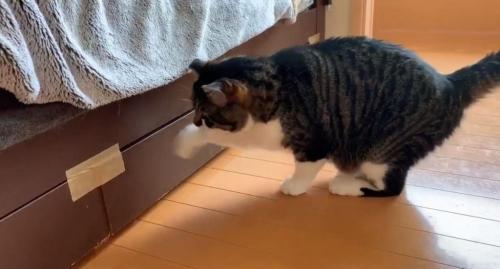 猫がベットの下を開けて入り込むので工夫した結果→「開かない理由に気付く」「猫様賢い」