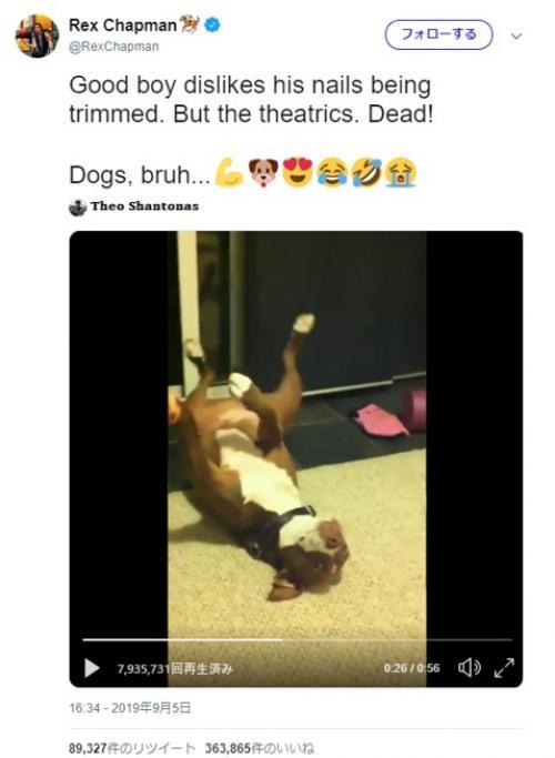お願い爪切るのやめて 気絶したフリをする犬が話題に