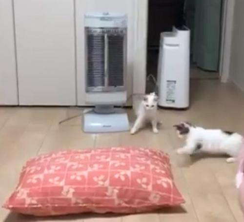 猫がクッションを警戒する動画が話題に「見てる子が一緒にのけ反ってる」「猫パンチ」