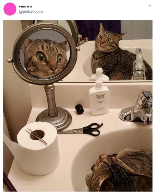 「一体どうなってるニャ!?」 鏡に映る自分の姿に驚くニャンコの写真がネットで大人気に