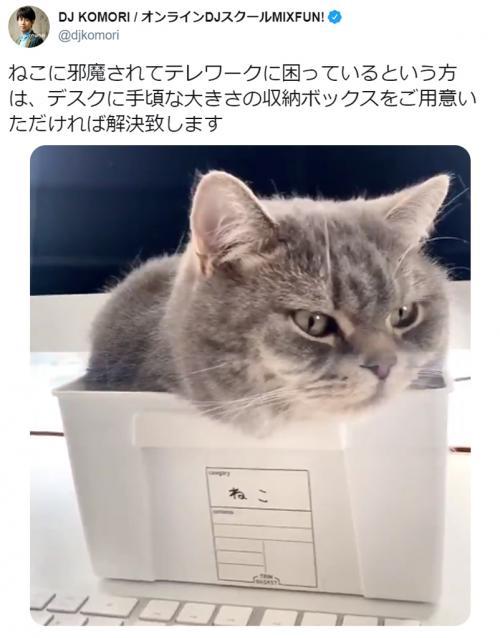 愛猫にテレワークを邪魔されている人に朗報! 収納ボックスを使った解決法が話題に
