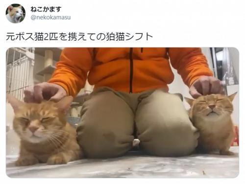 """こう見えて元ボス猫! 狛犬ならぬ""""狛猫""""スタイルで脱力する猫たちがかわいい"""