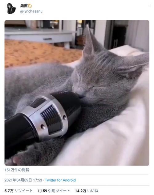 「爆笑しちゃった」「良いビブラート」 ロックバンドlynch.のドラマーによる猫の寝息エコー動画が大反響