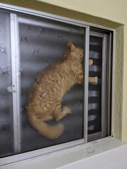 一体どうしてそんな場所に? 窓の網戸の隙間に挟まる猫が大変なことになってるとTwitterで話題に