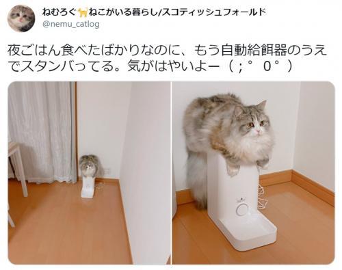ごはん食べたばかりなのに…! 給餌器と一体化する猫に「素晴らしいバランス」「可愛すぎ」の声