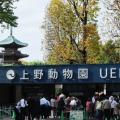【3月20日は何の日…!?】上野動物園が開園した日!
