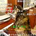 プリンターにビクビクする猫の動画がキュートすぎる!
