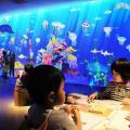 描いた魚が泳ぎ出す不思議な「お絵かき水族館」 東京と大阪に上陸!