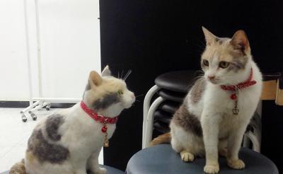 """天才女優猫もご対面でうにゃった!? 映画『先生と迷い猫』と羊毛フェルト作家""""猫ラボ""""コラボが瓜二つ? [オタ女]"""