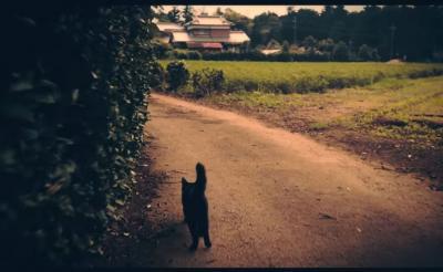 【なんで作った】そこは、猫をあつめる狂気の家――映画『ねこあつめの家』ホラー予告編[ホラー通信]