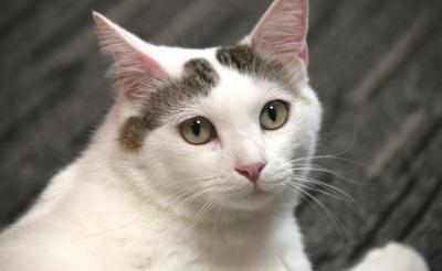 映画『寝ても覚めても』出演猫・八の字さんインタビュー「スリリングで衝撃的な恋愛映画ニャ」