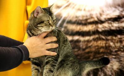 岩合光昭写真展&映画『ねことじいちゃん』を記念して猫の「ベーコン」がくす玉割に挑戦! 結果は?