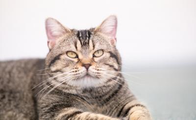写真たっぷり:『ねことじいちゃん』俳優猫・ベーコンにインタビュー! 役作りの秘訣は?