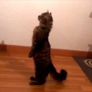 【動物動画】水槽の中が気になる猫