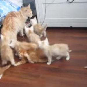 【動物動画】親猫を襲ったハプニングに子猫もビックリ!
