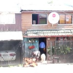【動物動画】一緒に薪を運ぶ犬