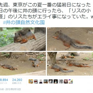 連日の猛暑でリスも大変!? 井の頭自然文化園で「リスたちがエライ事になっていた」画像が話題に