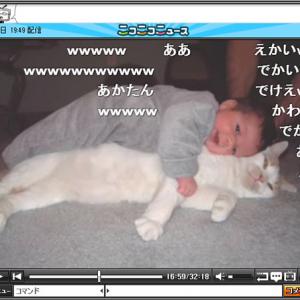 猫好きによる猫好きのための動画が萌える!