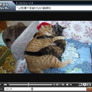 いつも抱き合いながら眠る猫