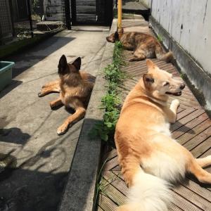 【犬の散歩】日光浴は健康の第一歩