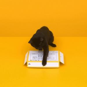 CGじゃないよ! クロネコが箱を組み立てる可愛い仕草に悶絶 猫なのに器用すぎ!!