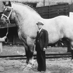 【画像】世界一大きな馬がリアル黒王号 むしろおっさんが小さいんだろ?(震え声)