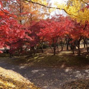もうすぐ紅葉の季節!モミジにも花が咲き、実が生るんです。