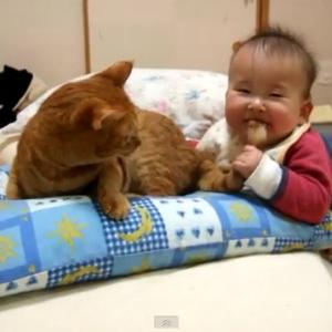 赤ちゃんに尻尾を握られる猫 あまりの痛さにブチギレそうになるも我慢