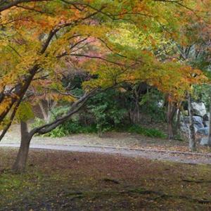 今秋の紅葉、遅くない? 滋賀・京都の平均気温を見てみた
