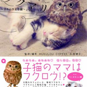 """モフモフ! 猫とフクロウの仲良しコンビ""""フクちゃん&マリモ""""の新書籍発売! 子猫のマリモは保存版[オタ女]"""