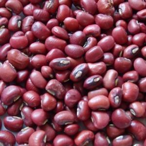 小豆の遺伝子をほぼ解析 3年後に大豆より大きな小豆ができる?