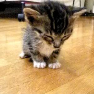 猫でも立ったままうたた寝するのって知ってる? そんな癒し動画