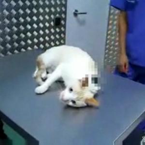 【マメチ】暴れる猫をおとなしくさせる裏技! ことわざ通りの現象が起きる