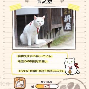 『猫侍』来年2月スペシャルドラマ放送決定! 公式アプリもかわいすぎる~!! [オタ女]