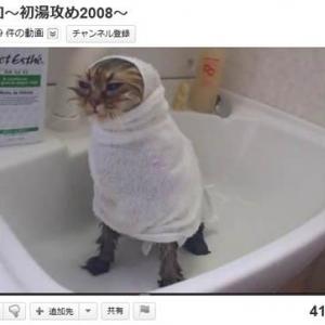 風呂もシャワーもドライヤーも怖がらないニャンコの動画