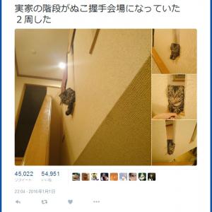 かわいいネコが神対応? 「実家の階段がネコの握手会場になっていた」というツイートが話題