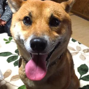 【オピニオン】犬の「殺処分0」は諸刃の剣 動物保護に税金を使うのは正しいのか