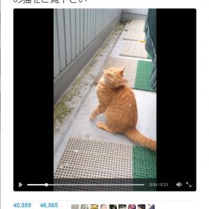 「初めて見る雪に興味津々」 かわいい猫の動画が『Twitter』で話題に